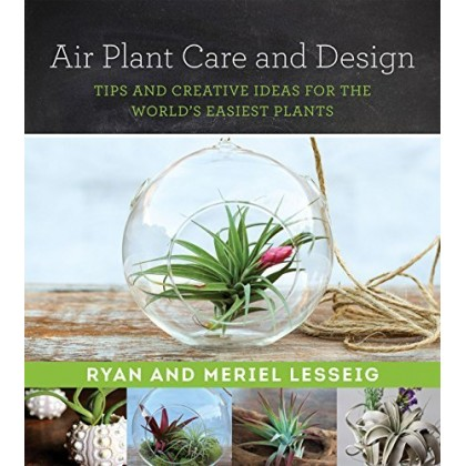 Air Plant Care And Design Tips And Creative Ideas For The World's Easiest Plants
